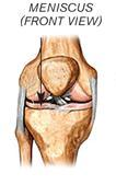 Diagram of knee